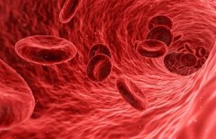 À l'intérieur d'un vaisseau sanguin
